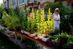 Open Gardens 2011 (125 of 164)