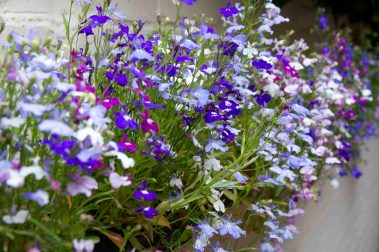 Open Gardens 2011 (130 of 164)