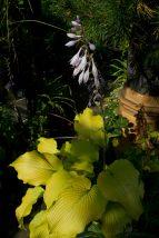 Open Gardens 2011 (157 of 164)