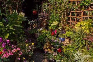 Open Gardens 2011 (160 of 164)