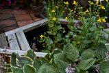 Open Gardens 2011 (164 of 164)