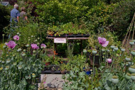 Open Gardens 2011 (27 of 164)