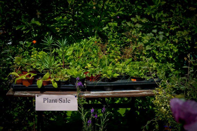 Open Gardens 2011 (28 of 164)