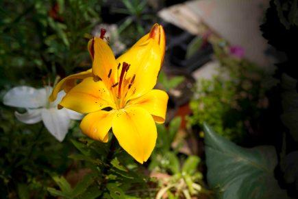 Open Gardens 2011 (31 of 164)