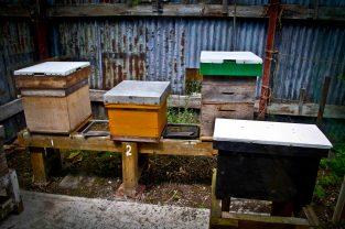 Open Gardens 2011 (39 of 164)