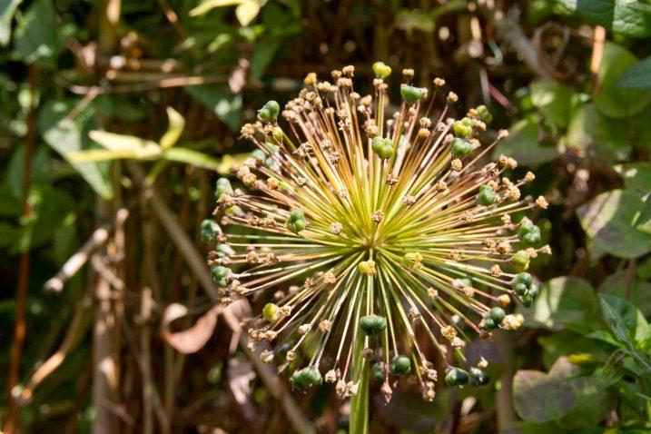 Open Gardens 2011 (5 of 164)