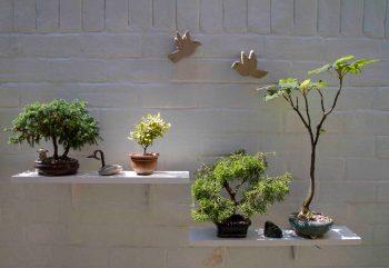 Open Gardens 2011 (7 of 164)