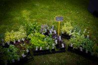 Open Gardens 2011 (78 of 164)
