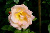 Open Gardens 2011 (95 of 164)